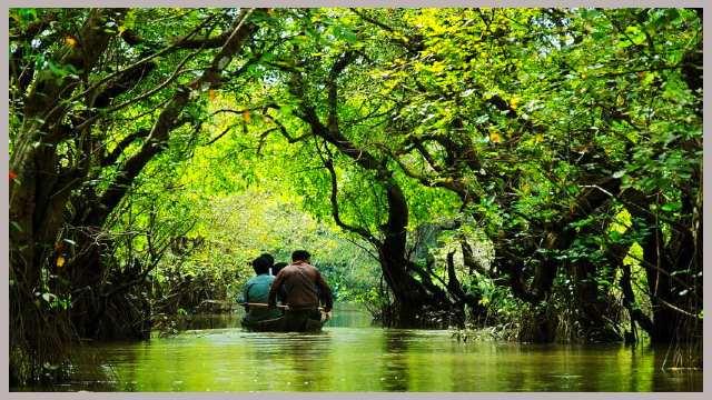 রাতারগুল-মিনি-সুন্দর-বন