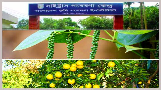 Citrus-Research-Center-Jaintapur