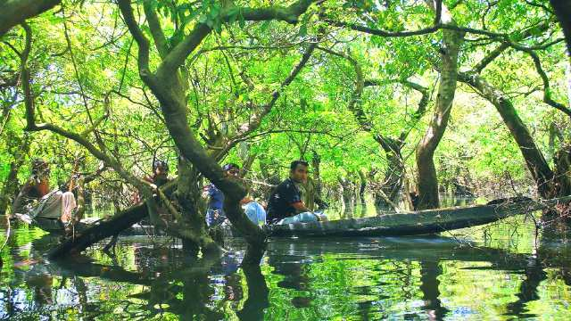 Ratargul-forest-journey-by-boat